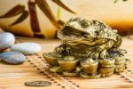 chinska zaba finansowa
